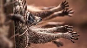 Hayvanların Ve İnsanların Yaratılışı Aynı Tarihlerde Mi Olmuştur